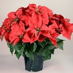 23-Realistic-Red-Artificial-Foil-Potted-Christmas-Poinsettia-Plant-0