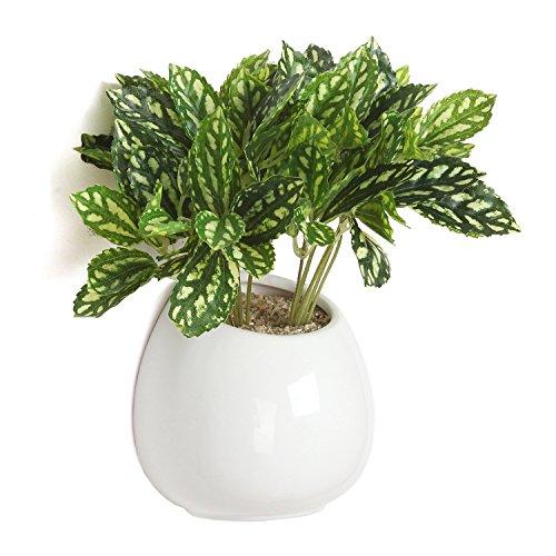 6-Inch-White-Ceramic-Wall-Mounted-Hanging-or-Freestanding-Decorative-Flower-Planter-Vase-Holder-Display-0-0