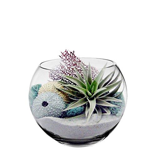 CYS-Glass-Bubble-Bowl-Fish-Bowl-Hand-Blown-Glass-Vase-Body-D-8-0-0