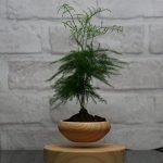 Levitating-Air-Bonsai-Pot-Magnetic-Levitation-Suspension-flower-and-air-bonsai-pot-0-1